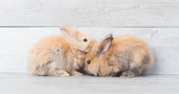 Kosmetyki nietestowane na zwierzętach – jak weryfikować marki kosmetyczne?